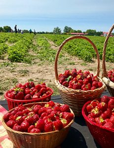 baskets of strawberries